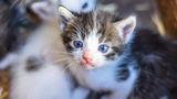 Малки котенца ; comments:5