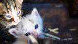 Бяло котенце ; comments:1