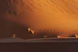 Пустинен портрет на Живота ; comments:31