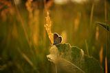 Залезът и пеперудата ; comments:25