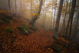 Есен в мъгливата гора ; comments:27
