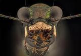 Beetle ; comments:9
