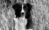 Гледаш го - куче, а в очите - човек! ; comments:2