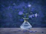 Blue ; comments:12