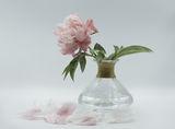 Божурено розово ; comments:9
