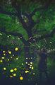 Магията на юнската гора... ; comments:15