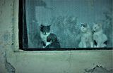 Двама не се карат, третият не печели.... ;) ; comments:25