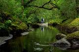 Зелена река ; comments:3