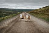 Исландски стопаджийки ; comments:16