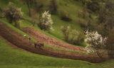 Пролетна родопска оран ; comments:30