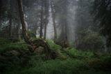 В мЪгела на гората ; comments:27