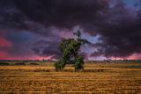 Бягащото дърво.... ; comments:17
