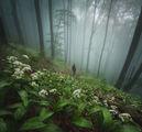 Изгубени в мъглата ; comments:32