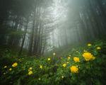 Скрити в мъгливата гора ; comments:24
