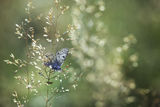 no name ( ID=2310742 ) ; comments:9