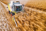 Жътва на царевица в Русенско ; comments:12
