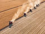 Жътва на царевица в землището на Кнежа ; comments:37