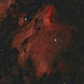 IC 5070 - The Pelican Nebula / Мъглявината Пеликан ; comments:6