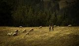 Пастирки ; comments:9