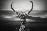 Horns Mursi ; comments:24