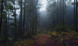 Нищо не пречиства душата така, както общуването с природата. ; comments:8