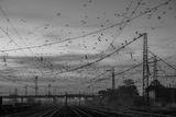 Остават птиците.... ; comments:9