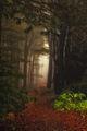 Мъгливо утро на Бузлуджа ; comments:20