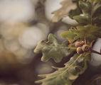 Недоразказана приказка за есен ; comments:27