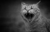 Котешки живот ; comments:15
