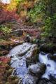 """""""Някой прошепна: """"Есен е!""""... И всичката красота се изсипа върху земята..."""" ; comments:3"""