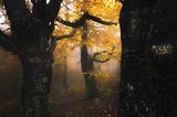есенни багри ; comments:30