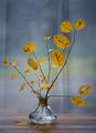 Last Autumn Days ; comments:21