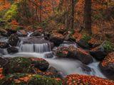 Още от Есента ; comments:68