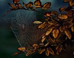 Есенна паяжина в цвят ; comments:41