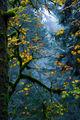 есен... ; comments:17