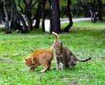 котенца ; comments:3