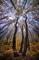 Есенни гиганти ; comments:14