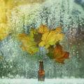 November Rain ; comments:13