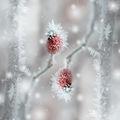 Deep-freezing II ; comments:19