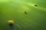 Зелена Есен ; comments:11