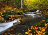 ,,Есента рисува'' ; comments:29