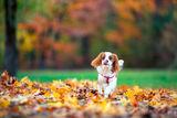 Кая и есента ; comments:3