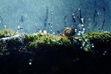 Под дъжда ; comments:12