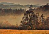 Цветове в мъглата ; comments:12