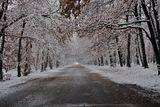 Дългоочакваната зима ни изненада пак ! ; comments:8