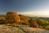 Есен в Софийска планина ; comments:6