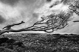 Полуделите дървета ; comments:5