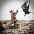 орел и гаргамел ; comments:9
