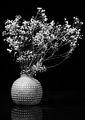 Сухи цветя ; comments:11