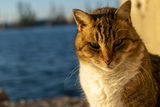 no name ( ID=2333954 ) ; comments:3